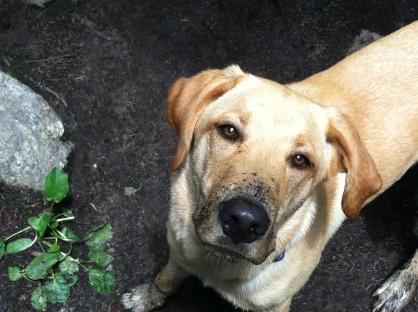 James Peak Wilderness Pup