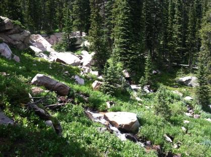 James Peak Wilderness Greenery